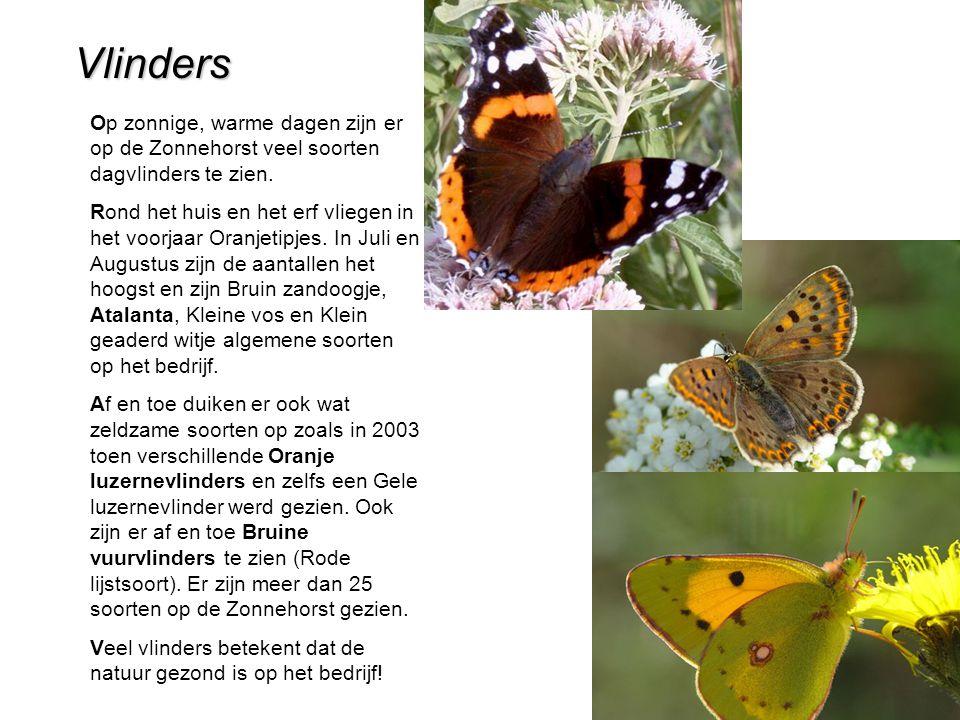 Vlinders Op zonnige, warme dagen zijn er op de Zonnehorst veel soorten dagvlinders te zien.