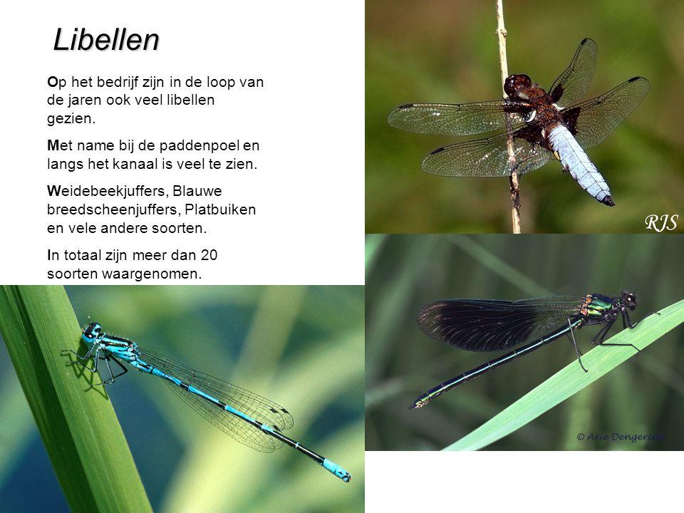 Libellen Op het bedrijf zijn in de loop van de jaren ook veel libellen gezien.