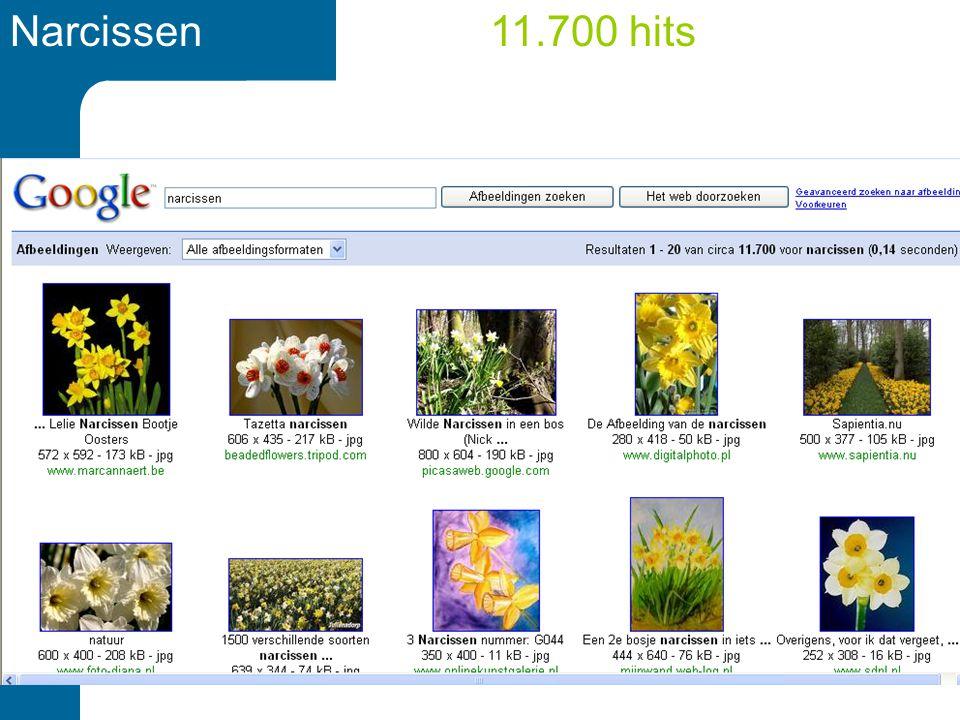 Narcissen11.700 hits
