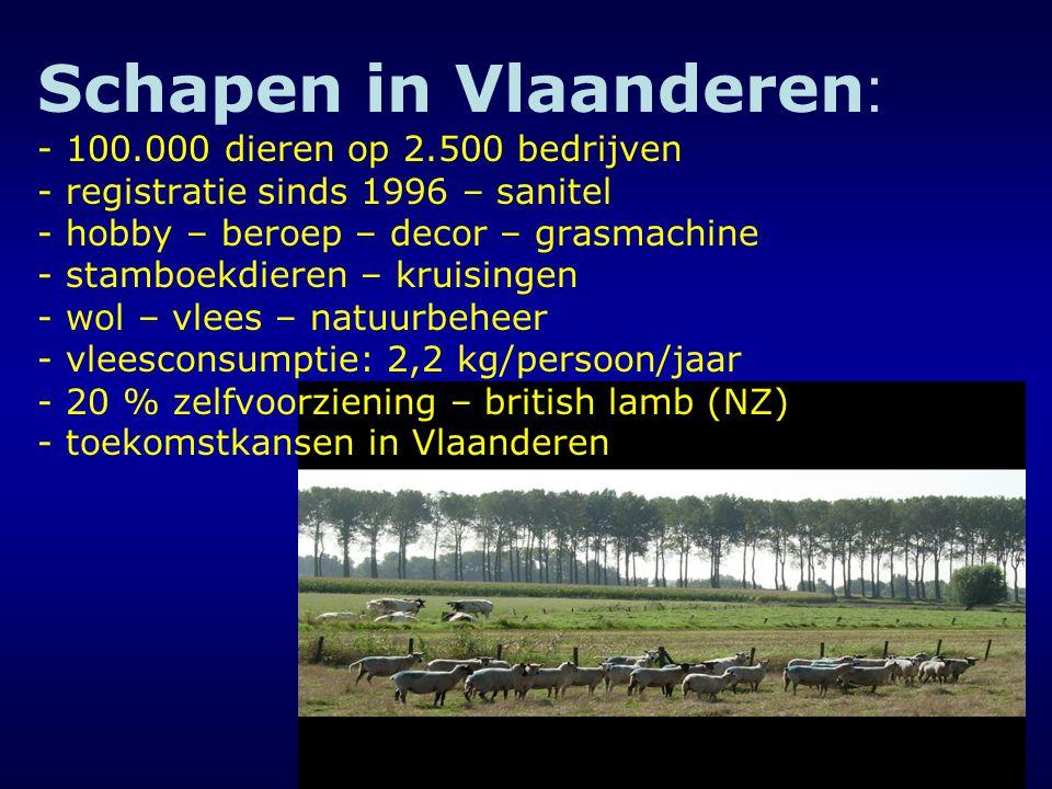 Schapen in Vlaanderen : - 100.000 dieren op 2.500 bedrijven - registratie sinds 1996 – sanitel - hobby – beroep – decor – grasmachine - stamboekdieren – kruisingen - wol – vlees – natuurbeheer - vleesconsumptie: 2,2 kg/persoon/jaar - 20 % zelfvoorziening – british lamb (NZ) - toekomstkansen in Vlaanderen