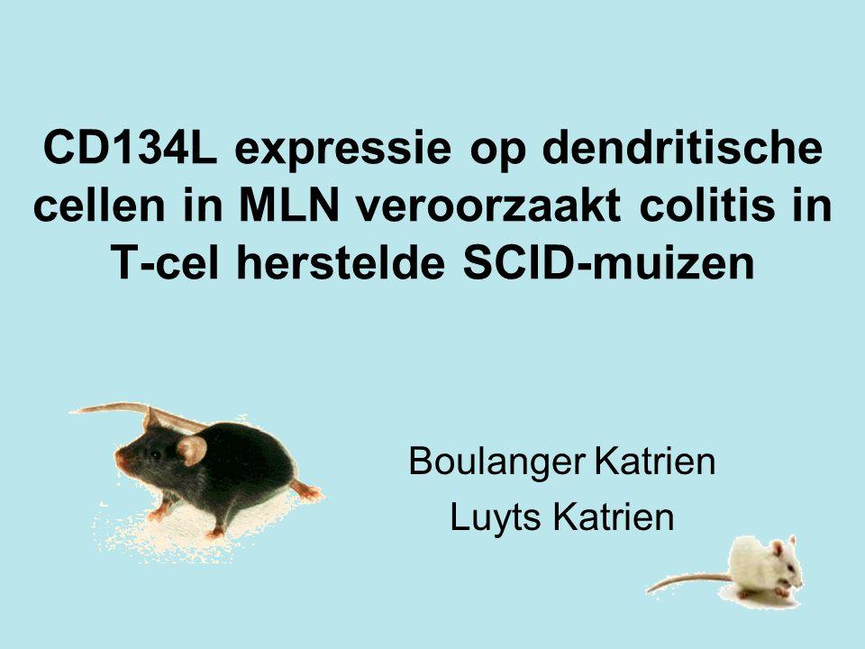 CD134L expressie op dendritische cellen in MLN veroorzaakt colitis in T-cel herstelde SCID-muizen Boulanger Katrien Luyts Katrien