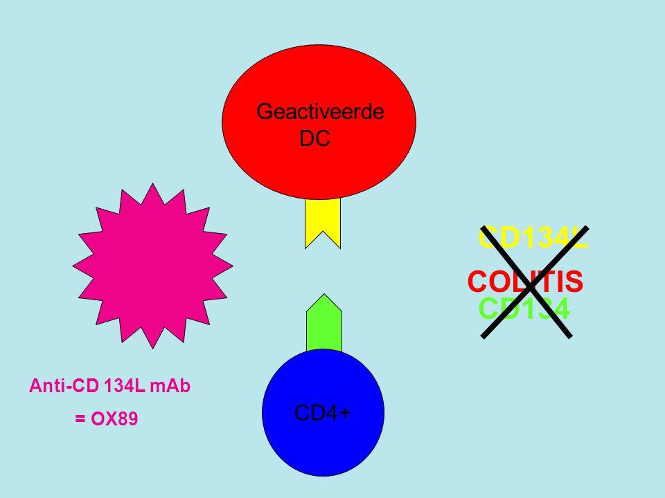 Testopzet •Modelsysteem: transfer van CD45RB high CD4 + T cellen naar 8 weken oude SCID muizen  Th1- gemedieerde colitis (IBD) •15-36 x meer CD134L + geactiveerde DC cellen in MLN bij colitis •Voorkomen door anti-CD134L mAb cotransfer met CD45RB low T reg cellen