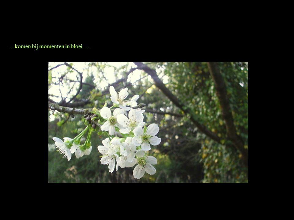… komen bij momenten in bloei …