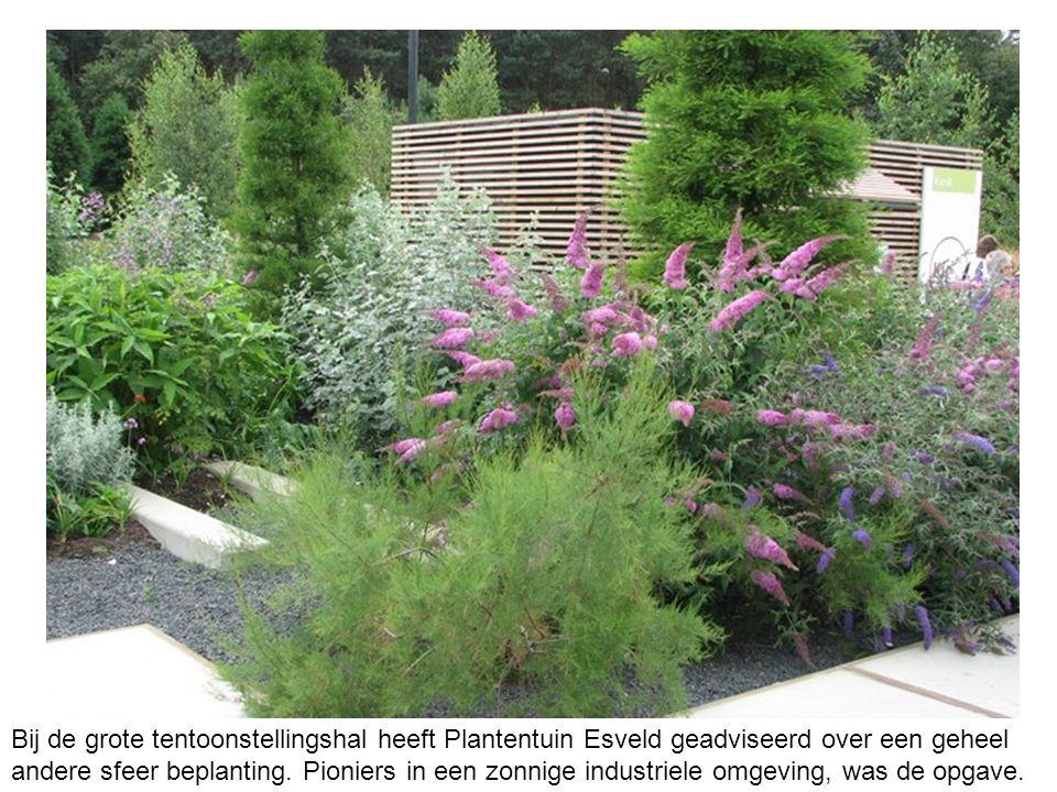Bij de grote tentoonstellingshal heeft Plantentuin Esveld geadviseerd over een geheel andere sfeer beplanting.