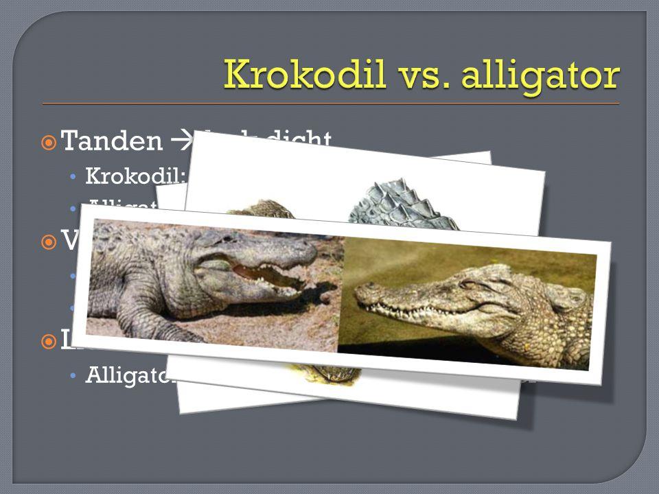  Tanden  bek dicht • Krokodil: nog grote tand zichtbaar • Alligator: geen grote tanden zichtbaar  Vorm kop • Krokodil: smalle V-vormige bek • Allig