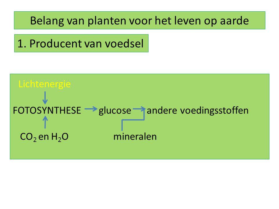 Belang van planten voor het leven op aarde 1. Producent van voedsel Lichtenergie FOTOSYNTHESE glucose andere voedingsstoffen CO 2 en H 2 O mineralen