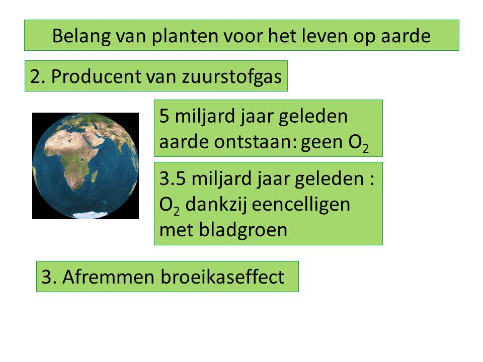 Belang van planten voor het leven op aarde 2. Producent van zuurstofgas 5 miljard jaar geleden aarde ontstaan: geen O 2 3.5 miljard jaar geleden : O 2