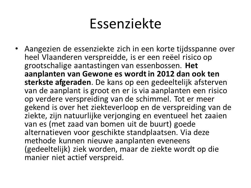 Essenziekte • Aangezien de essenziekte zich in een korte tijdsspanne over heel Vlaanderen verspreidde, is er een reëel risico op grootschalige aantast