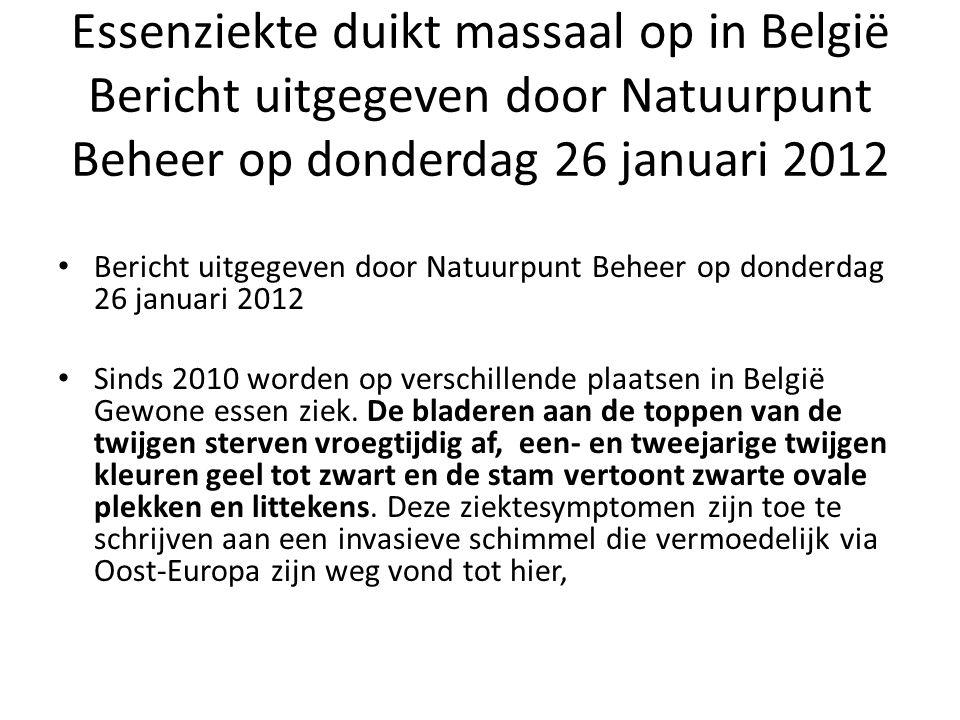 Essenziekte • De eerste officiële vaststelling van de schimmel Chalara fraxinea in het Vlaamse Gewest dateert uit het najaar van 2010, toen de ziekte werd aangetoond in een jonge aanplanting van Gewone es (Fraxinus excelsior) in Schorisse (Oost-Vlaanderen).