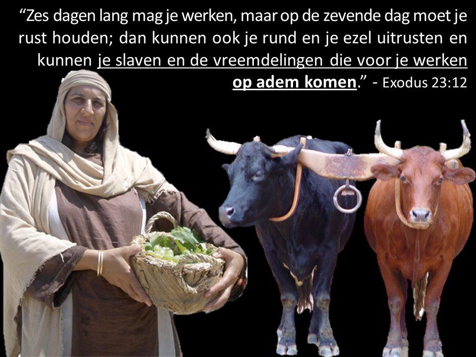 """""""Zes dagen lang mag je werken, maar op de zevende dag moet je rust houden; dan kunnen ook je rund en je ezel uitrusten en kunnen je slaven en de vreem"""