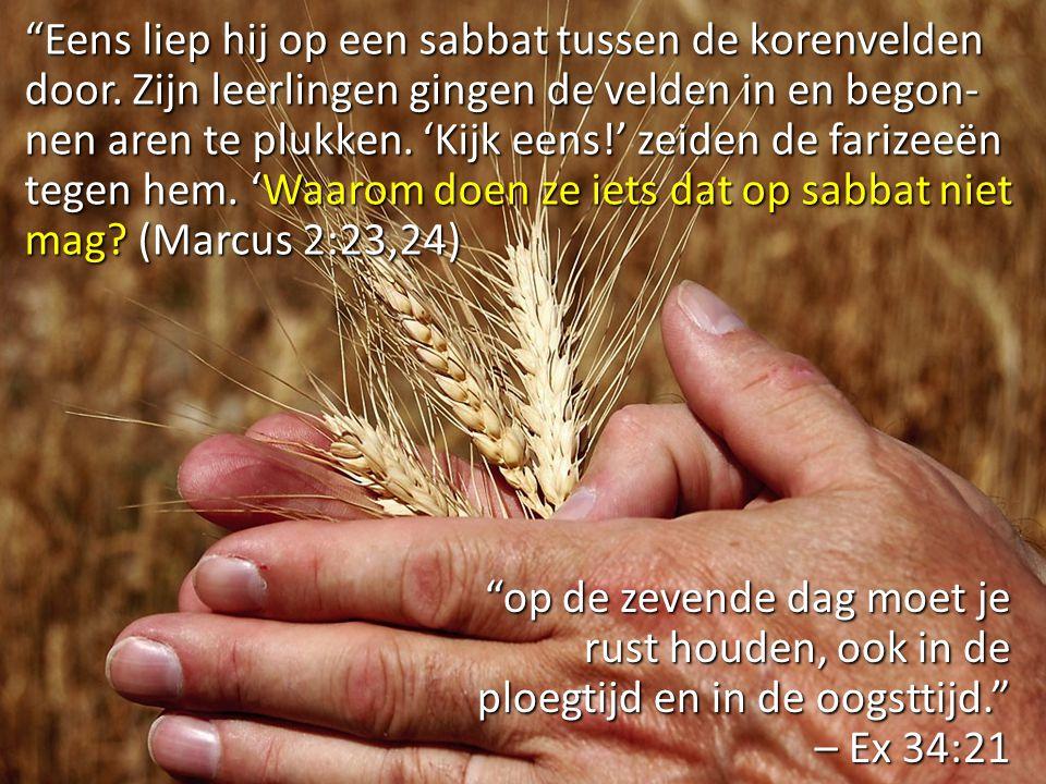 """""""Eens liep hij op een sabbat tussen de korenvelden door. Zijn leerlingen gingen de velden in en begon- nen aren te plukken. 'Kijk eens!' zeiden de far"""