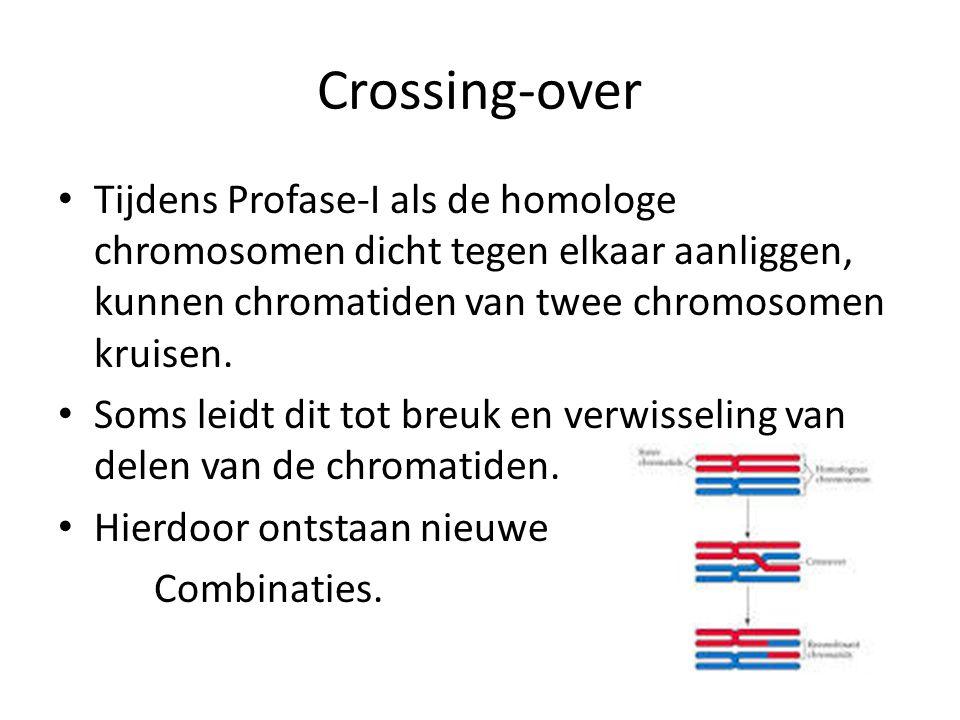 Crossing-over • Tijdens Profase-I als de homologe chromosomen dicht tegen elkaar aanliggen, kunnen chromatiden van twee chromosomen kruisen.