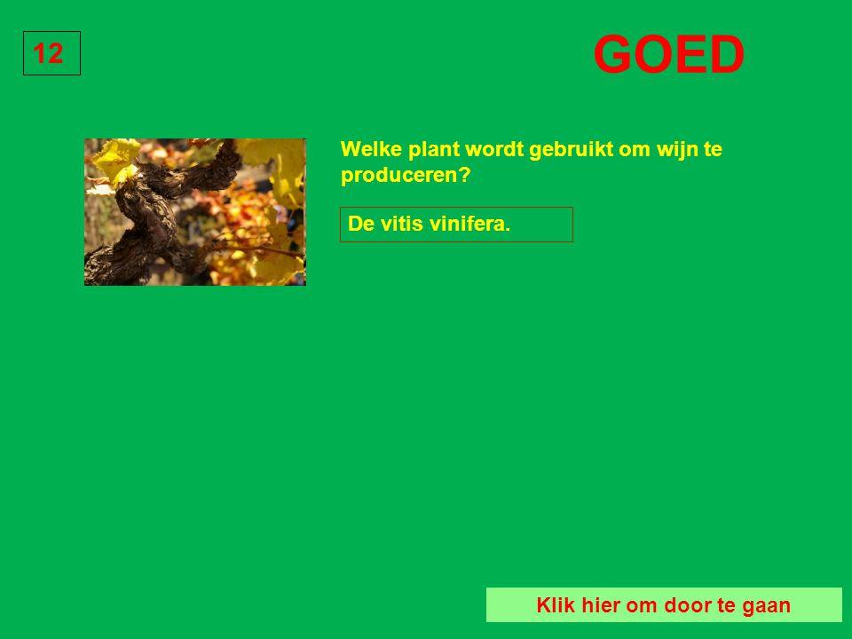 Welke plant wordt gebruikt om wijn te produceren? De vitis pinarda. Vraag 12 De vitis oenologia. De vitis vinifera.