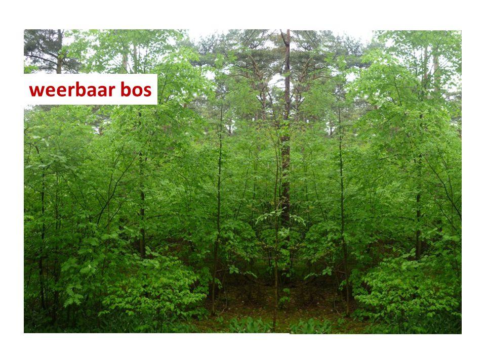 weerbaar bos
