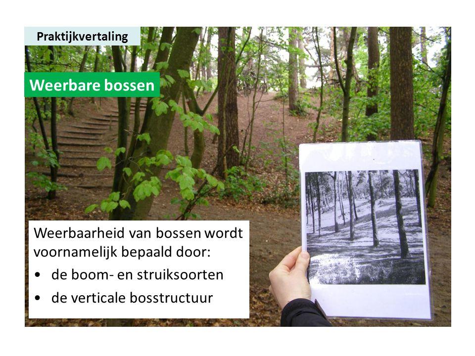 Praktijkvertaling Weerbare bossen Weerbaarheid van bossen wordt voornamelijk bepaald door: •de boom- en struiksoorten •de verticale bosstructuur