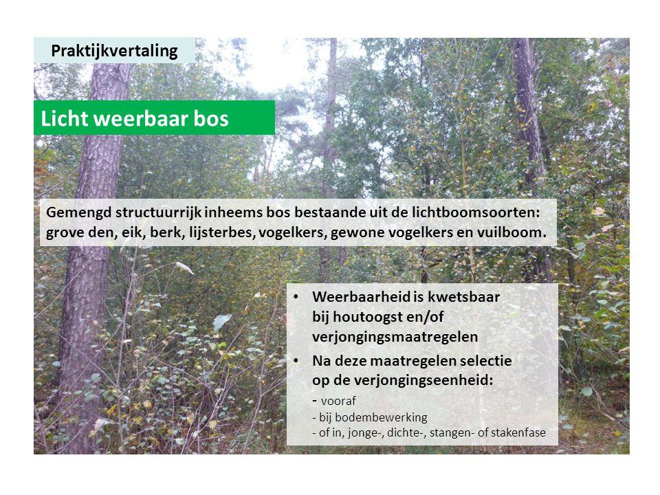 Praktijkvertaling Licht weerbaar bos Gemengd structuurrijk inheems bos bestaande uit de lichtboomsoorten: grove den, eik, berk, lijsterbes, vogelkers,