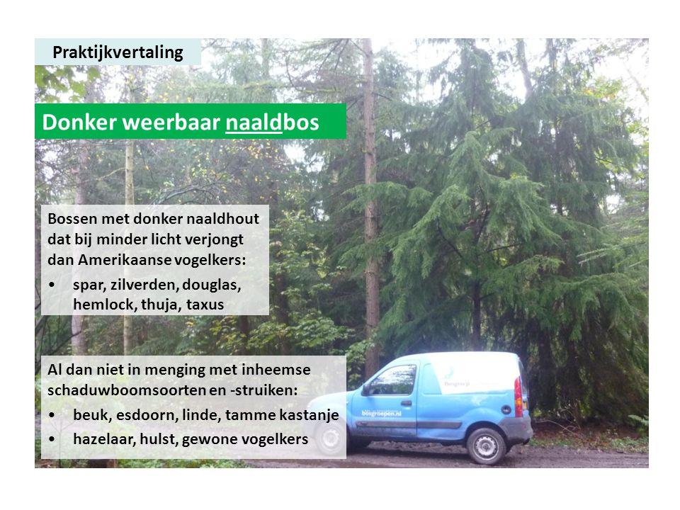 Praktijkvertaling Donker weerbaar naaldbos Bossen met donker naaldhout dat bij minder licht verjongt dan Amerikaanse vogelkers: •spar, zilverden, doug