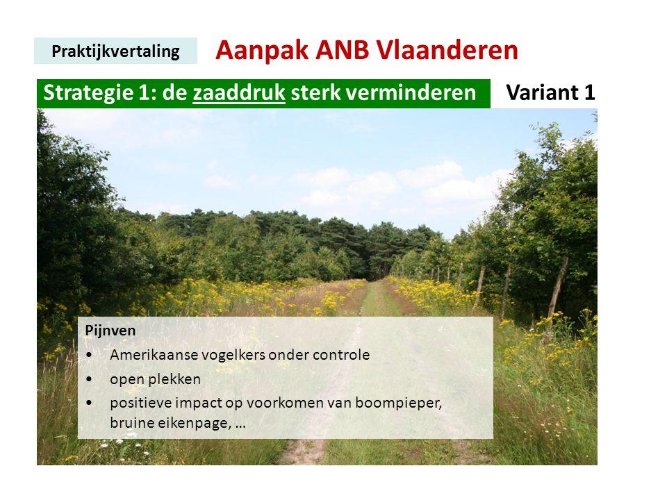 Aanpak ANB Vlaanderen Praktijkvertaling Strategie 1: de zaaddruk sterk verminderen. Variant 1 Pijnven •Amerikaanse vogelkers onder controle •open plek