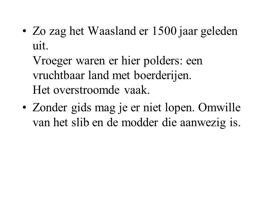 •Zo zag het Waasland er 1500 jaar geleden uit.