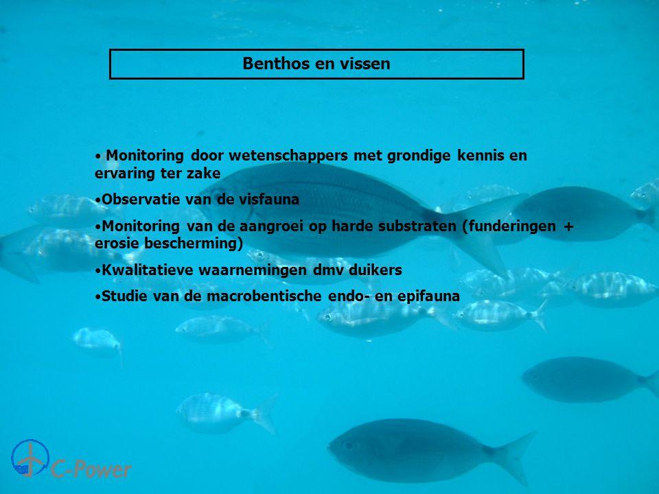 Benthos en vissen • Monitoring door wetenschappers met grondige kennis en ervaring ter zake •Observatie van de visfauna •Monitoring van de aangroei op harde substraten (funderingen + erosie bescherming) •Kwalitatieve waarnemingen dmv duikers •Studie van de macrobentische endo- en epifauna