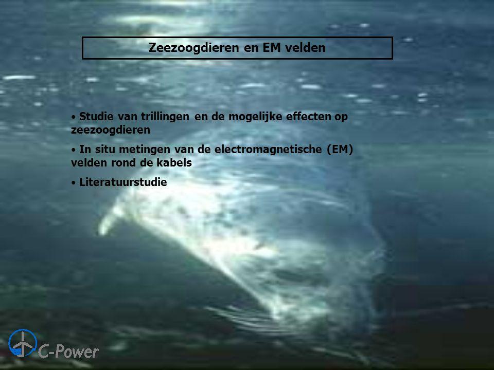 Zeezoogdieren en EM velden • Studie van trillingen en de mogelijke effecten op zeezoogdieren • In situ metingen van de electromagnetische (EM) velden rond de kabels • Literatuurstudie