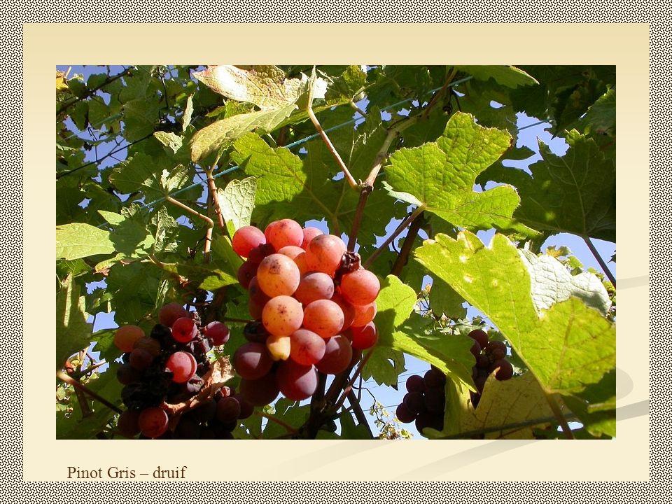 De wijnbouw in de Elzas is kleinschalig, veel wijnboeren bezitten minder dan tien hectare wijngaard.