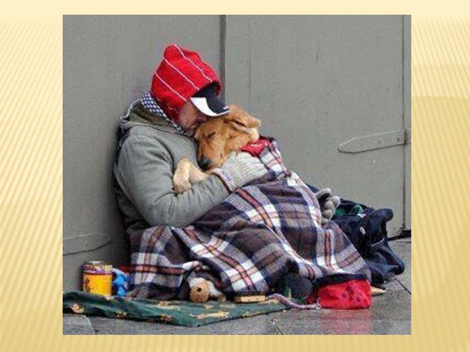 'n Hond is het enige wezen op aarde dat méér van je kan houden dan van zichzelf…