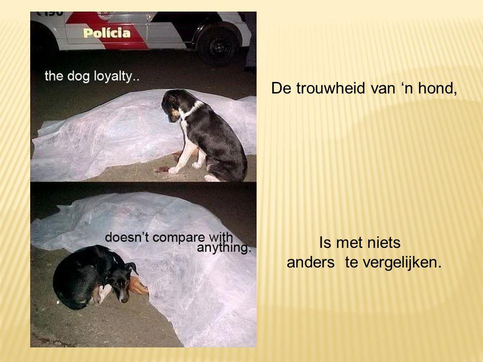 De trouwheid van 'n hond, Is met niets anders te vergelijken.
