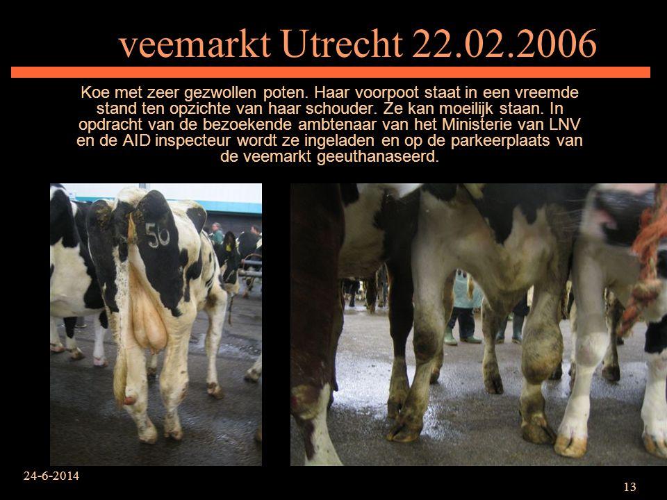 24-6-2014 13 veemarkt Utrecht 22.02.2006 Koe met zeer gezwollen poten. Haar voorpoot staat in een vreemde stand ten opzichte van haar schouder. Ze kan