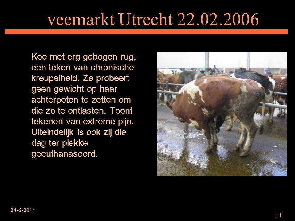 24-6-2014 14 veemarkt Utrecht 22.02.2006 Koe met erg gebogen rug, een teken van chronische kreupelheid. Ze probeert geen gewicht op haar achterpoten t
