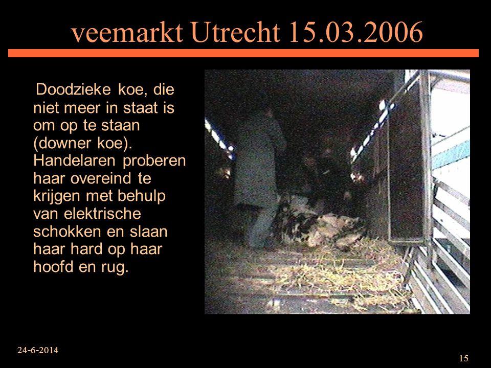 24-6-2014 15 veemarkt Utrecht 15.03.2006 Doodzieke koe, die niet meer in staat is om op te staan (downer koe). Handelaren proberen haar overeind te kr