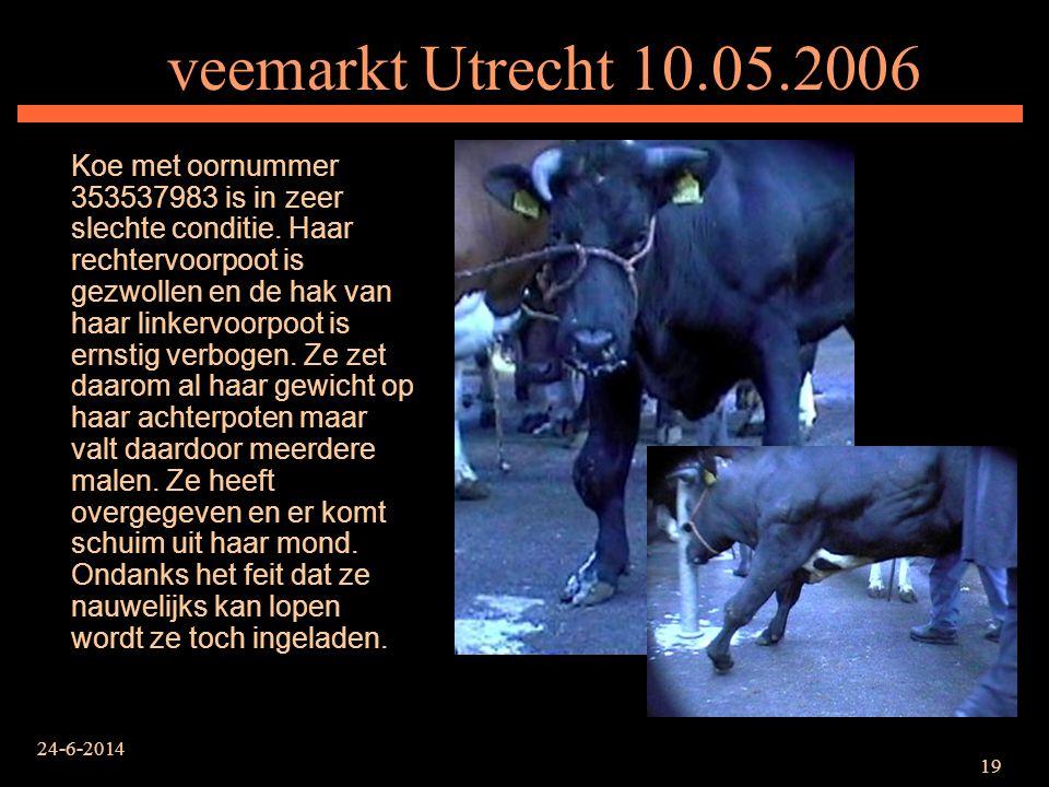 24-6-2014 19 veemarkt Utrecht 10.05.2006 Koe met oornummer 353537983 is in zeer slechte conditie. Haar rechtervoorpoot is gezwollen en de hak van haar
