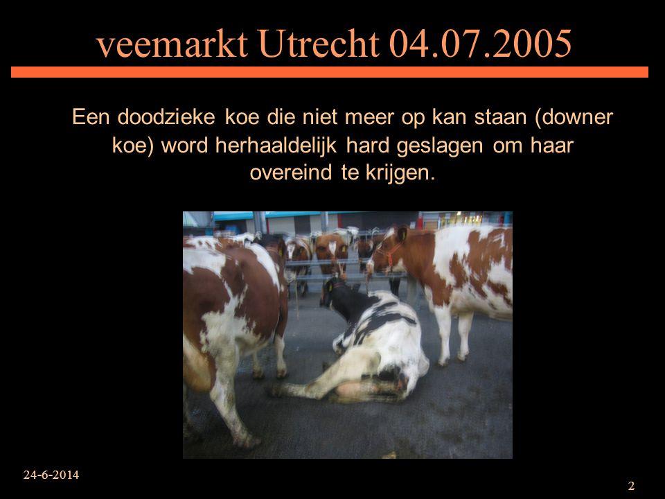 24-6-2014 2 veemarkt Utrecht 04.07.2005 Een doodzieke koe die niet meer op kan staan (downer koe) word herhaaldelijk hard geslagen om haar overeind te