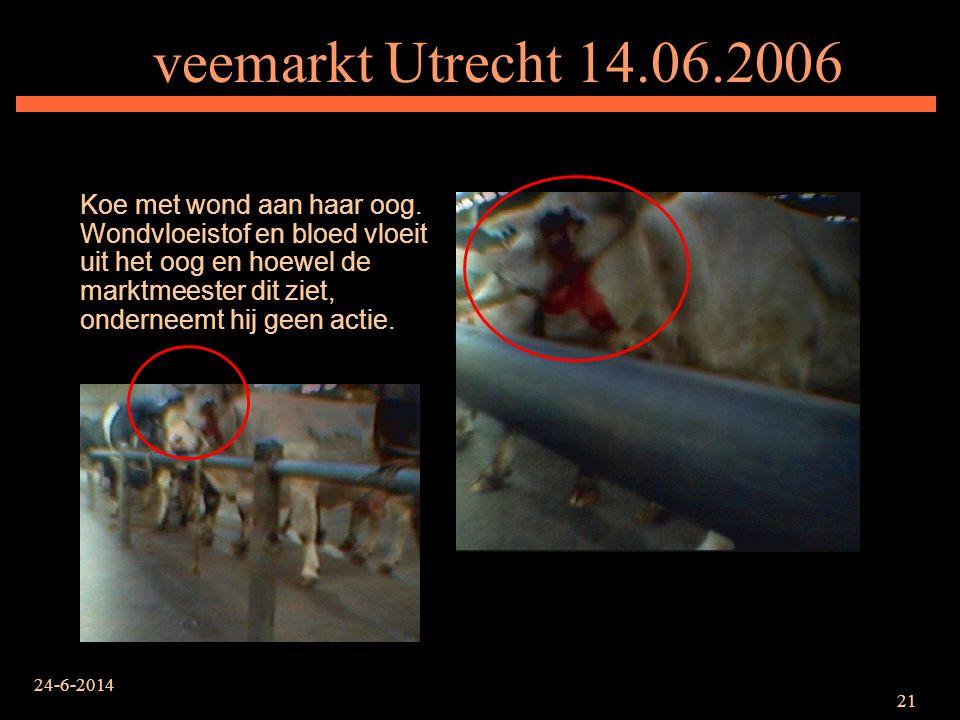 24-6-2014 21 veemarkt Utrecht 14.06.2006 Koe met wond aan haar oog. Wondvloeistof en bloed vloeit uit het oog en hoewel de marktmeester dit ziet, onde
