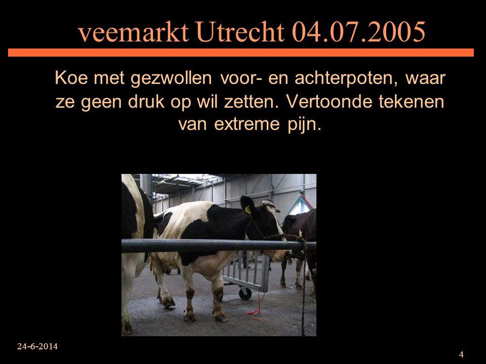 24-6-2014 4 veemarkt Utrecht 04.07.2005 Koe met gezwollen voor- en achterpoten, waar ze geen druk op wil zetten. Vertoonde tekenen van extreme pijn.