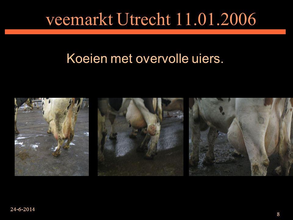24-6-2014 9 veemarkt Utrecht 25.01.2006 Koe met gebogen rug, een teken van chronische kreupelheid.