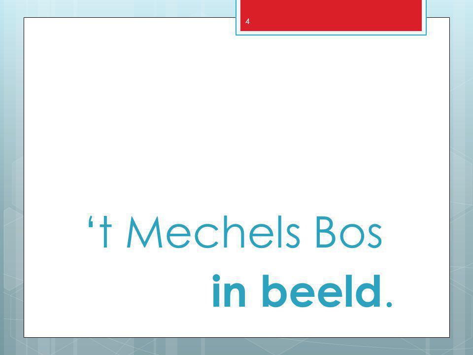 4 't Mechels Bos in beeld.