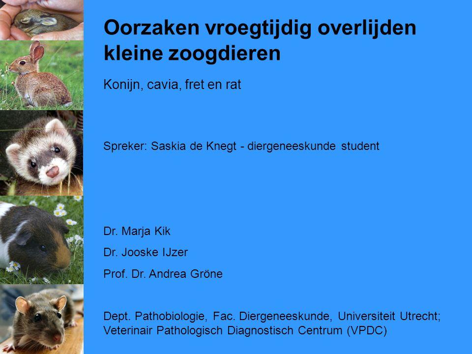 Oorzaken vroegtijdig overlijden kleine zoogdieren Konijn, cavia, fret en rat Spreker: Saskia de Knegt - diergeneeskunde student Dr. Marja Kik Dr. Joos