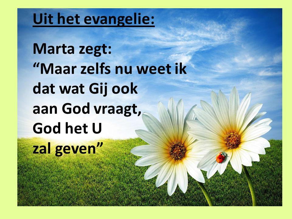 """Uit het evangelie: Marta zegt: """"Maar zelfs nu weet ik dat wat Gij ook aan God vraagt, God het U zal geven"""""""