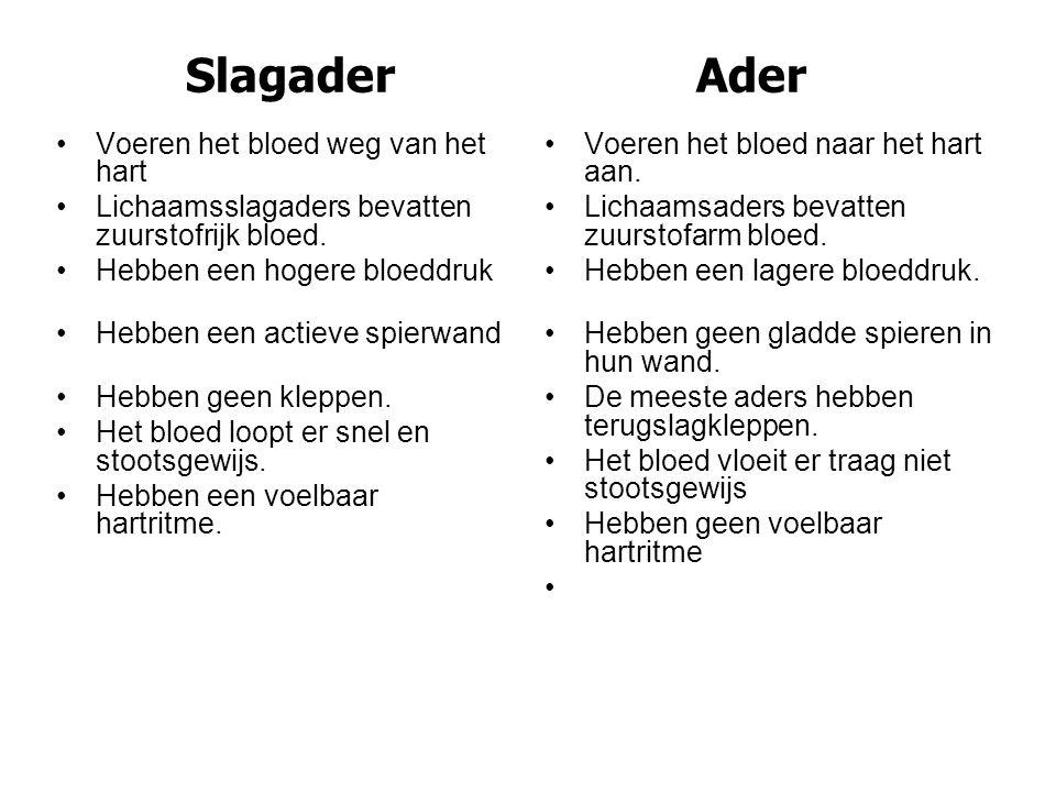 Slagader Ader •Voeren het bloed weg van het hart •Lichaamsslagaders bevatten zuurstofrijk bloed. •Hebben een hogere bloeddruk •Hebben een actieve spie