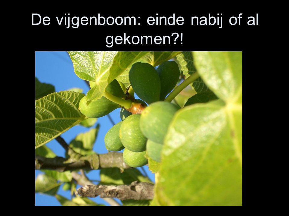 De vijgenboom: einde nabij of al gekomen?!