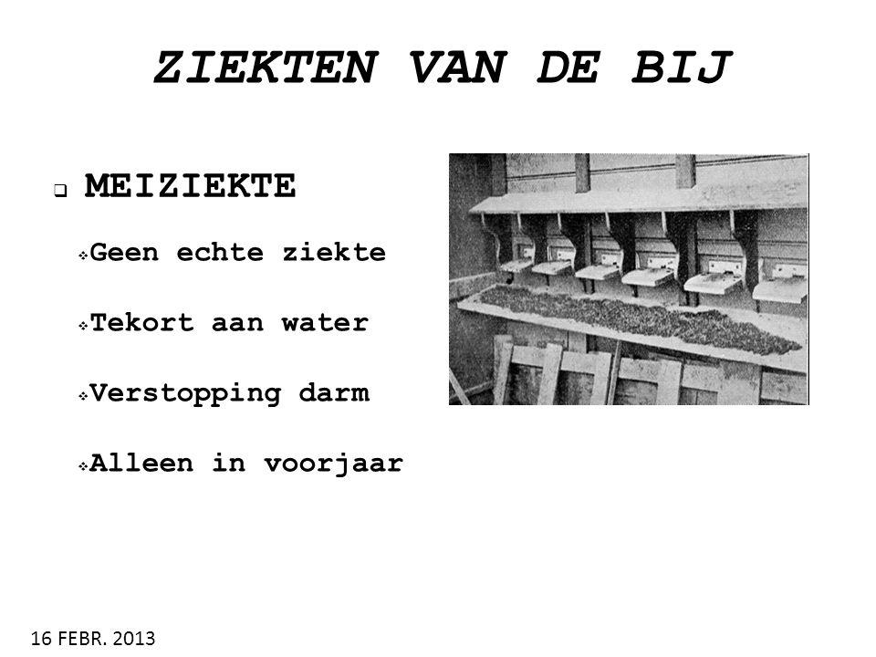 ZIEKTEN VAN DE BIJ  MEIZIEKTE 16 FEBR. 2013  Geen echte ziekte  Tekort aan water  Verstopping darm  Alleen in voorjaar