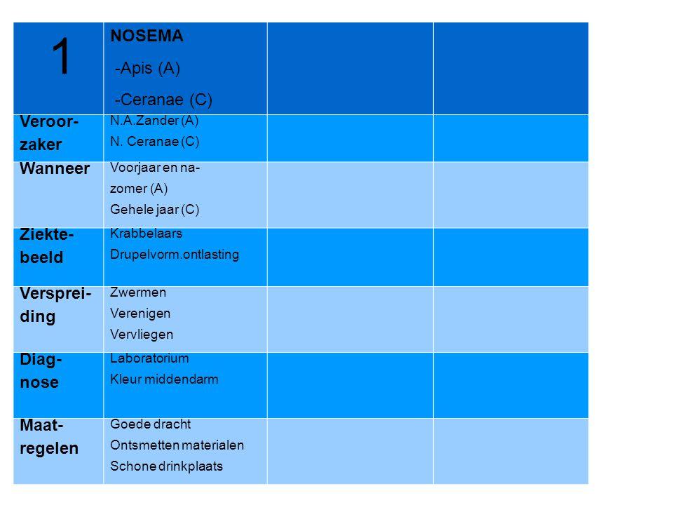 1 NOSEMA -Apis (A) -Ceranae (C) Veroor- zaker N.A.Zander (A) N. Ceranae (C) Wanneer Voorjaar en na- zomer (A) Gehele jaar (C) Ziekte- beeld Krabbelaar
