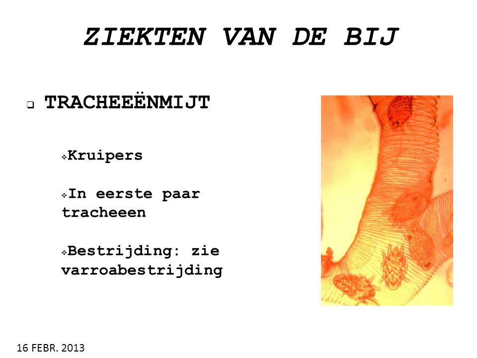 ZIEKTEN VAN DE BIJ  TRACHEEËNMIJT 16 FEBR. 2013  Kruipers  In eerste paar tracheeen  Bestrijding: zie varroabestrijding