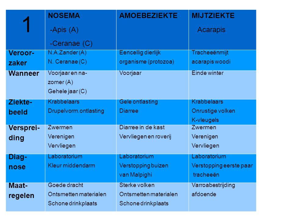 1 NOSEMA -Apis (A) -Ceranae (C) AMOEBEZIEKTE MIJTZIEKTE Acarapis Veroor- zaker N.A.Zander (A) N. Ceranae (C) Eencellig dierlijk organisme (protozoa) T