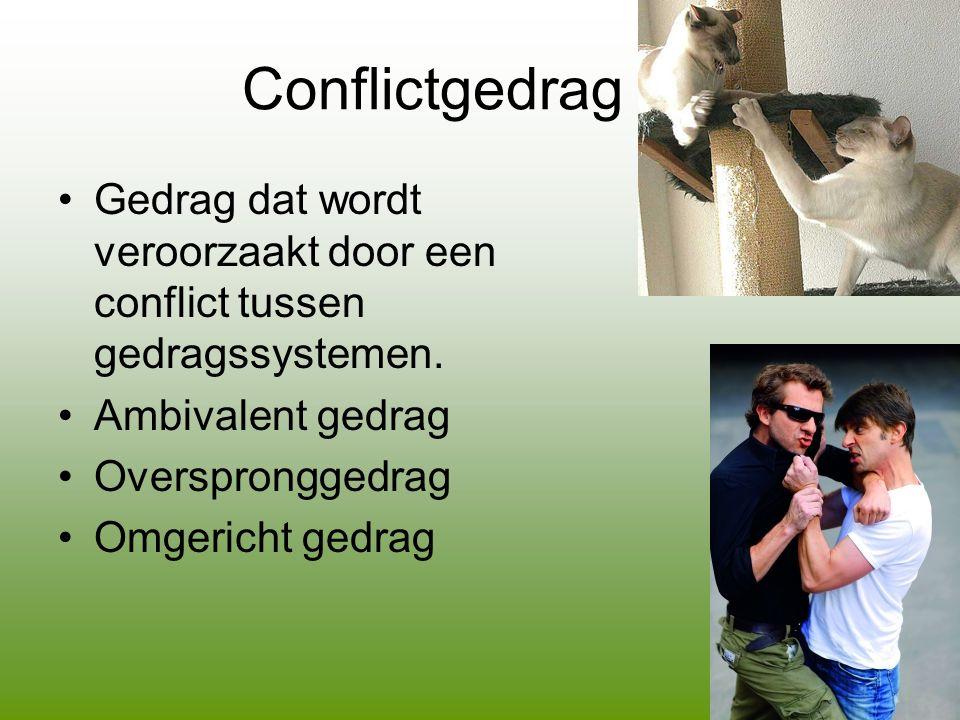 Conflictgedrag •Gedrag dat wordt veroorzaakt door een conflict tussen gedragssystemen.