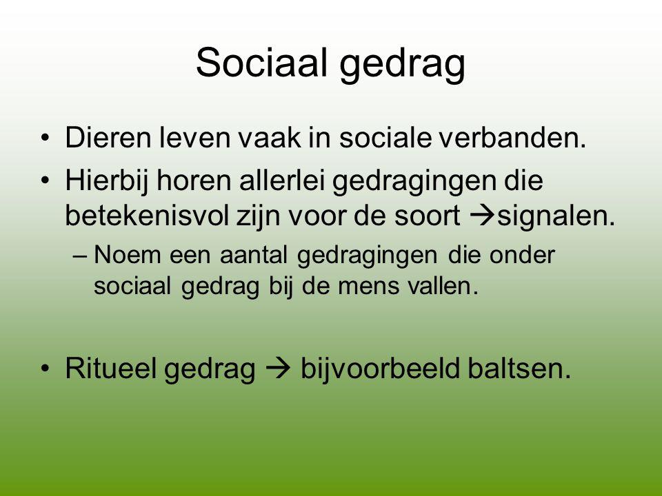 Sociaal gedrag •Dieren leven vaak in sociale verbanden.