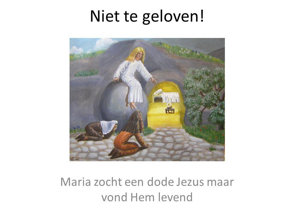 Niet te geloven! Maria zocht een dode Jezus maar vond Hem levend