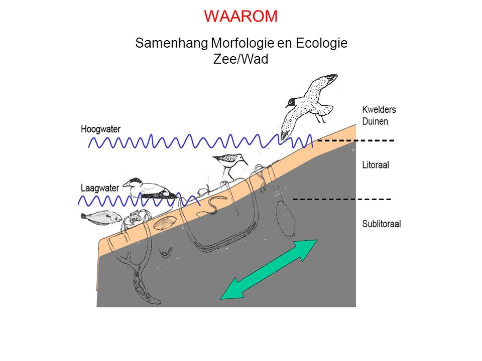 Olff Samenhang Morfologie en Ecologie Zee/Wad WAAROM