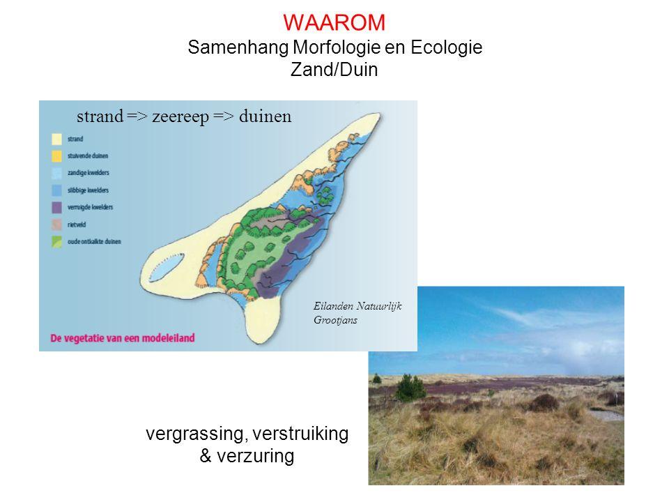 vergrassing, verstruiking & verzuring Eilanden Natuurlijk Grootjans Samenhang Morfologie en Ecologie Zand/Duin strand => zeereep => duinen WAAROM